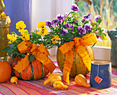 Viola cornuta sherbet 'Yellow Babyface', 'Beaconsfield', Cucurbita