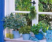 Salvia 'Creme de la Creme', Thymus citriodorus