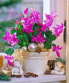 Schlumbergera (Christmas cactus), tree decorations, angels, star anise