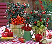 Solanum pseudocapsicum (Korallenbäumchen), Capsicum (Chili, Paprika)