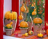 Cucurbita (pumpkin) laid on terracotta pots with moss