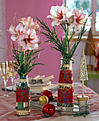 Hippeastrum (Amaryllis) in white-red with gilded betula