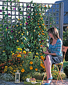 Colorful summer bed with trellis
