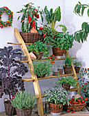 Leaning shelf with herbs and vegetables in the pot