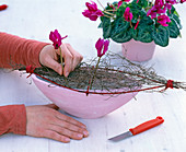 Cyclamen arrangement in pink jardiniere