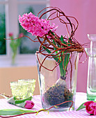 Hyacinthus orientalis 'Pink Pearl', Sailx (Willow branches)