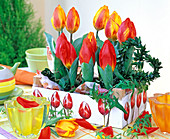 Tulipa 'Red Paradise', 'Flair' (tulip) in white wooden box