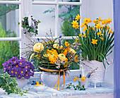 Narcissus 'Tete a Tete', Primula acaulis