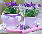 Viola odorata (fragrance violet) in white ceramic