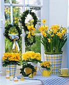 Yellow window, Narcissus 'Tete A Tete' (Daffodil)