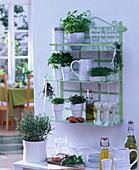 Shelf with Petroselinum (parsley), Ocimum (basil)