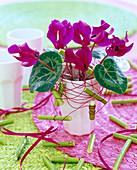 Red wire with dogwood pieces as plug-in aid for Cyclamen