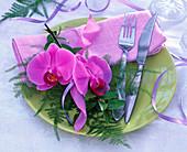 Flowers of Phalaenopsis (Malay flower), Asparagus (ornamental asparagus)