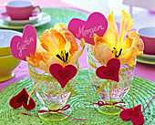 Tulipa flowers (tulip) in glasses with floral ribbon