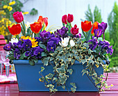 Plant blue metal box with viola and spring onions