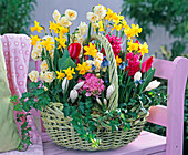 Spring Basket with Narcissus 'Bridal Crown', 'Tete A Tete'