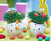 Cress sowing in chicken eggs mug