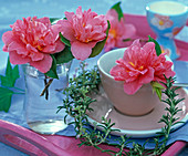 Blooming pink flowered Camellia in glass and espresso cup