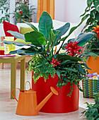 Philodendron, Guzmania, Adiantum, Ficus pumila