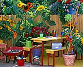 Children's balcony, rudbeckia (sun hat)