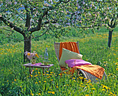 Basket lounger and table on orchard with Taraxacum