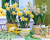 Narcissus, Hyacinthus, woodchip basket with posy