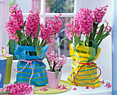 Pink Hyacinthus in marigold bags packed on the table