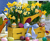 Yellow woodchip basket as Easter basket with Narcissus 'Minnow', 'Jetfire'