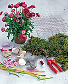Easter basket with moss and bellis