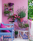 Herbal balcony with Lavandula (lavender), Thymus citriodorus