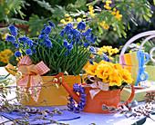 Muscari (Grape Hyacinth) in yellow metal bowl