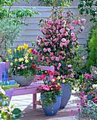 Camellia 'Spring Festival', Narcissus, Tulipa
