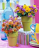 Sträuße aus Viola cornuta (Hornveilchen) in orange-rosa und gelb-lila