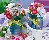 Malus and Bellis in small blue-striped vases