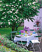 Table laid under white Syringa vulgaris (lilac)