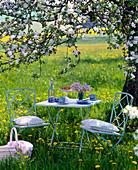 Sitting set under blossoming apple tree