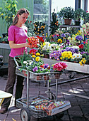 Young woman buying spring flowers in the garden center