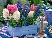 White, pink and blue Hyacinthus (hyacinth), Viola odorata