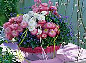 Bellis (daisies), Myosotis (Forget-me-not)