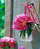 Suspended glass with peony blossom