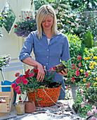 Plant orange hanging basket