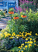 Spring bed with Fritillaria, Narcissus 'Jetfire' 'Minnow'