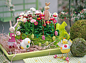 Bellis (daisies) in a bright green basket, rabbits, chickens