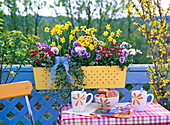 Spring box, Narcissus (Daffodil), Bellis (daisies)