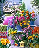Spring terrace, Prunus kurilensis 'Ruby'
