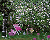 Malus tree blooming, including deck chair with pillows, picnic basket