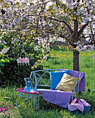 Blossoming prunus with blue bench, blanket, pillows and basket