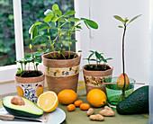Citrus (kumquat, mandarin), arachis (peanut), Persea (avocado)