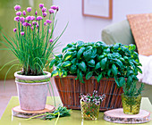 Shin Yong wood-Allium schoenoprasum, Ocimum basilicum