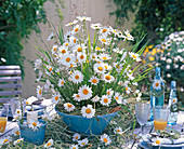 Arrangement of Leucanthemum (Spring Marguerite)